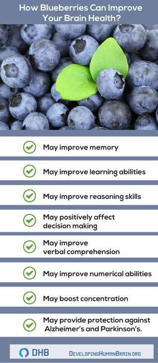 blueberries are brain food infographic